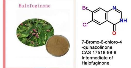 7-Bromo-6-chloro-4-quinazolinone